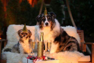 Top 50 Dog Jokes For Whatsapp in 2020